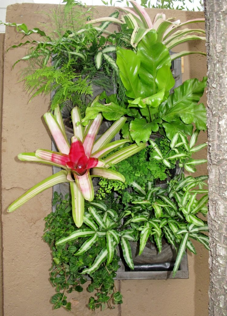 Bromeliad-garden-1