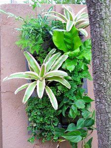 Vertical-garden-tropical-10