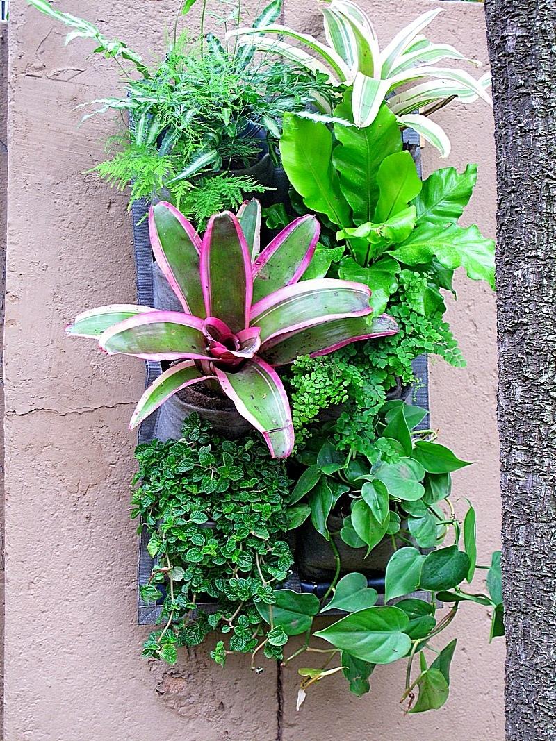 Vertical-garden-tropical-11