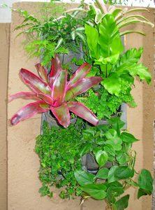 Vertical-garden-tropical-2