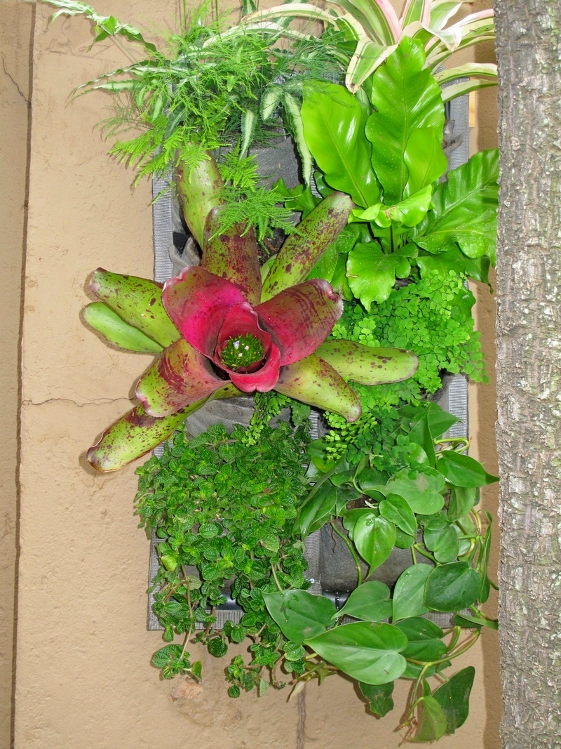 Vertical-garden-tropical-4