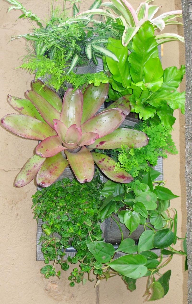 Vertical-garden-tropical-5