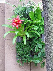 Vertical-garden-tropical-8