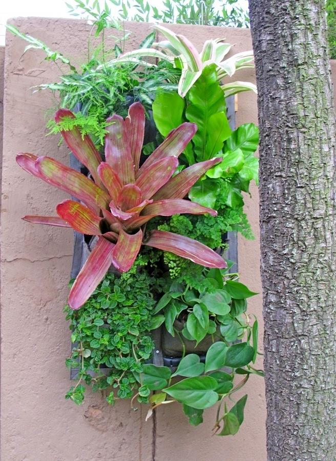 Vertical-garden-tropical-9