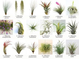 Magical airplants by Patioscapes