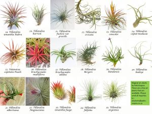 agical airplants by Patioscapes-2