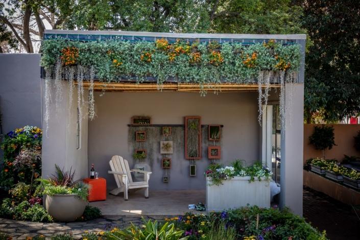 fascia garden- bidens-lotus-maculata