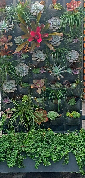vertical-garden-rental-succulents