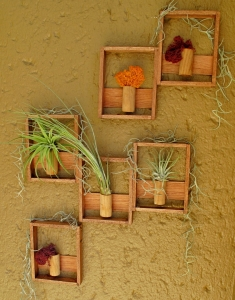 Air plant vertical- Six-african-rosewood-cherrywood-holders