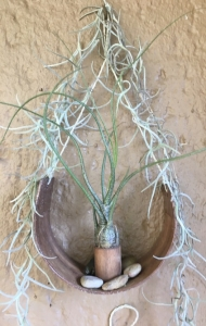 Horse shoe wall mounted air plant holder