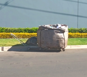 Recycle-dustbin-raiders